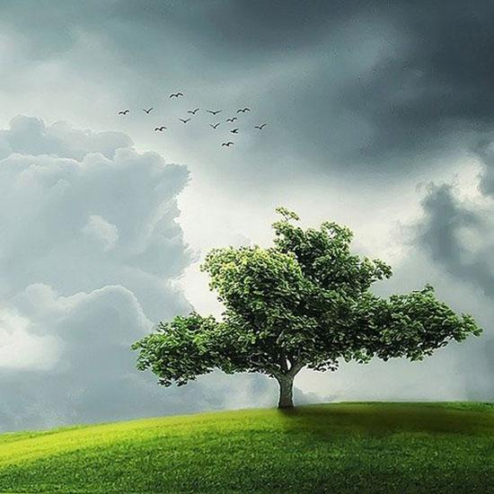 kafelki2021-duze-drzewa-rosliny-na-zamowienie-sadzenie–foty-550×550